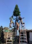 Setting up Farley's Christmas tree