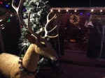Christmas reindeer at Farley's, Santa Cruz, Ca